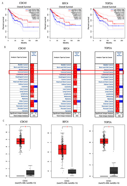 Overall survival analysis and expression of hub genes in normal and cancer tissues.