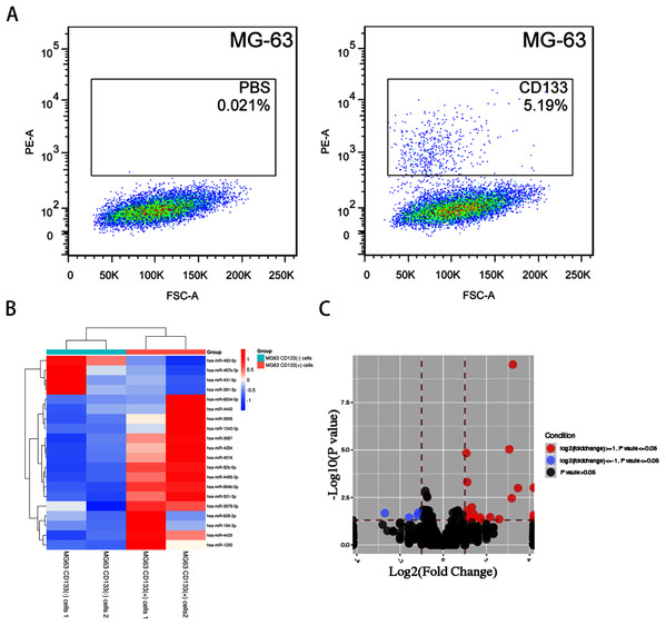 The miRNA profile in CD133(+) cells compared with CD133(–) cells from MG-63 cell line.