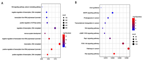Top 10 biological processes (A) and KEGG pathway (B) analysis terms of top three upregulated miRNAs and top three downregulated miRNAs predicted target genes.