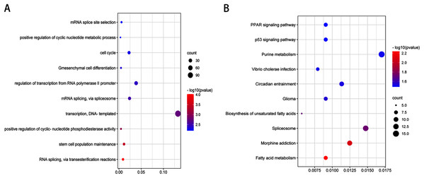 Top 10 biological processes (A) and KEGG pathway (B) analysis terms of top three upregulated miRNAs and top three downregulated miRNAs validated target genes.