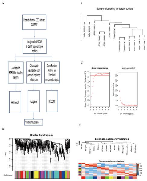 Study flowchart and WGCNA analysis.
