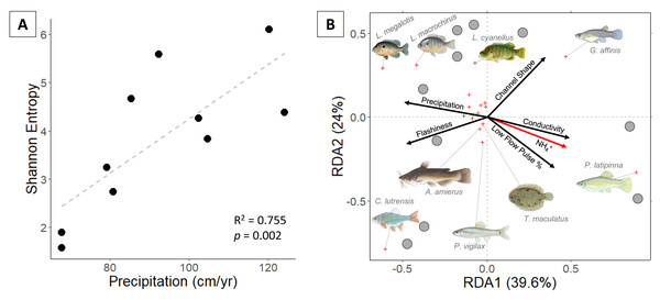 (A) Fish Shannon-Hill diversity plotted against annual precipitation (cm/yr); (B) fish community ordination using Hellinger transformation and redundancy analysis. Axes labels display the proportion of the variance explained as a percentage.