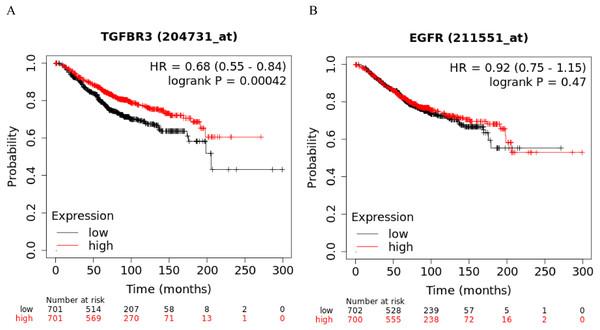 Kaplan–Meier curve analysis of potential target genes, TGFβR3 and EGFR, of hsa-miR-21-5p.