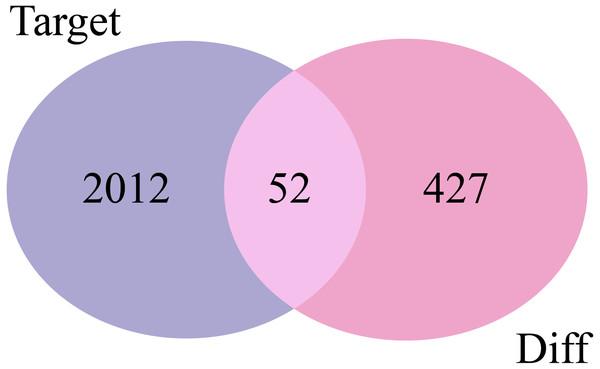 Venn diagrams of target mRNAs and DE-mRNAs. Target, predicted target mRNAs; Diff, DE-mRNAs obtained by GSE29044.
