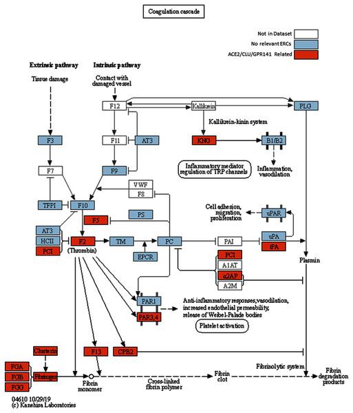 Modified KEGG coagulation pathway.