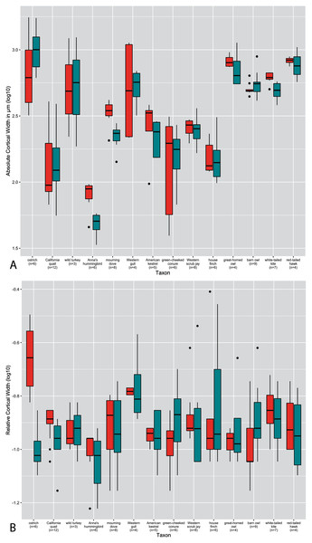 Boxplots showing variation in cortical thickness by taxon, where red represents measurements of the humerus and green measurements of the femur.