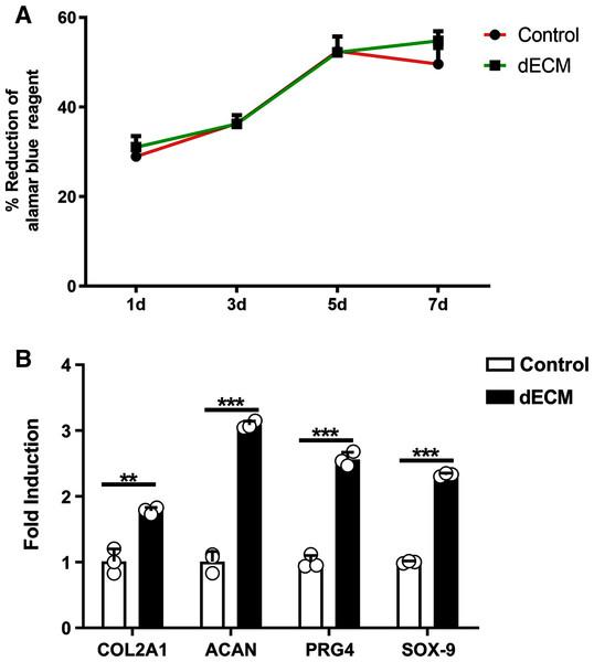 dECM enhance the anabolism of chondrocyteser.