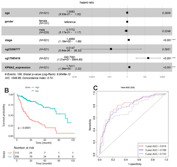 Construction and evaluation of HCC OS risk model with KPNA2 data and clinical features.