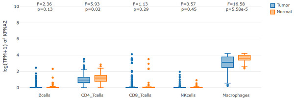 KPNA2 expression comparisons in immune cells between HCC samples and their paired normal livers.