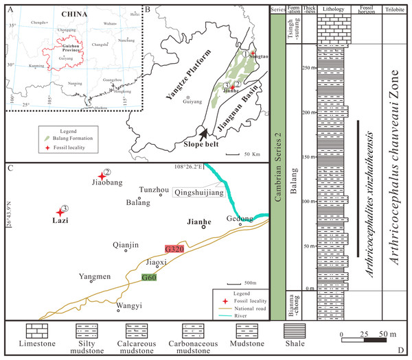 Locality map of the fossil site and stratigraphic horizon of Arthricocephalites xinzhaiheensis in Guizhou Province.