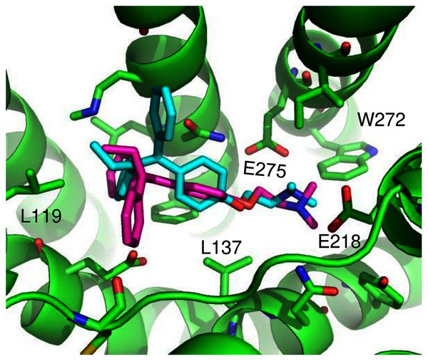 Predicted tamoxifen binding sites in GPER.