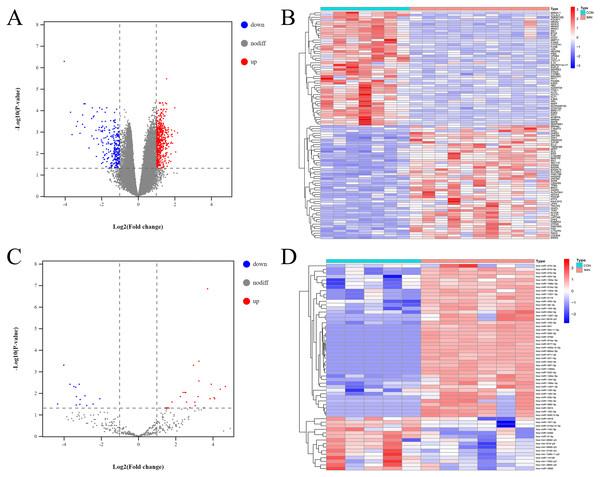 Profiling of DE mRNAs and DE miRNAs in IMN.