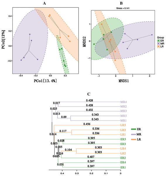 Principal coordinates analysis (PCoA) (A), MNDS (B) and the UPGMA tree (C).