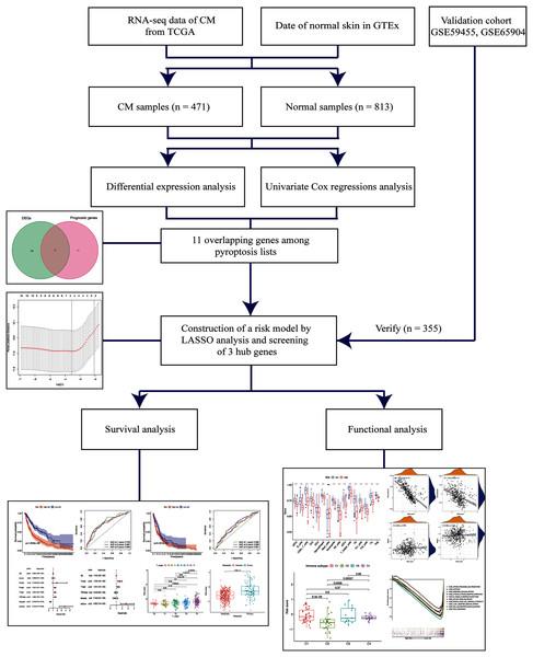 Schema of the study.