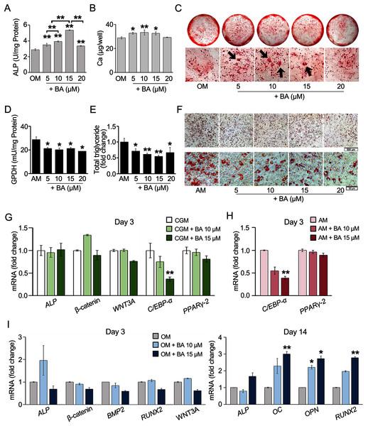 BA increased hMSC osteogenic differentiation but decreased hMSC adipogenic differentiation.