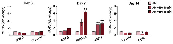 BA increased the expressions of brown adipogenic markers, PGC-1α, and UCP-1 on day 7 of hMSC adipogenesis.