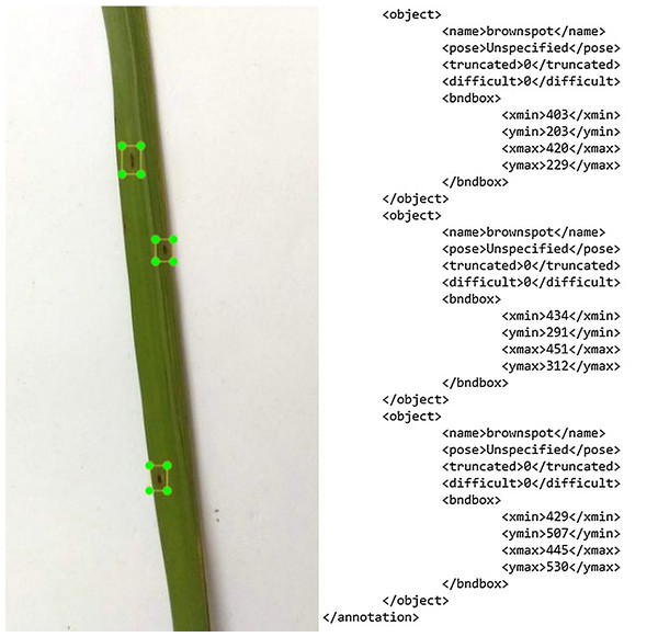The image annotation outcome in XML file.