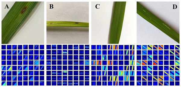 Activation visualization results: (A) Rice Blast (B) Brown Spot (C) Healthy (D) Hispa.