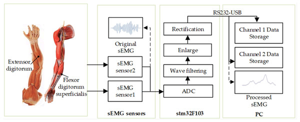Flowchart of original sEMG signal acquisition and processing.