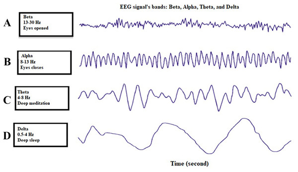 Four different bands of the EEG signal (Vallat, 2018).