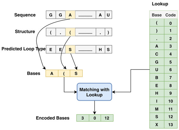 Base method steps for the encoding process associated with sequence, structure and predicted loop type data.