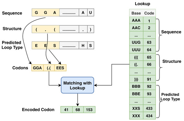 Codon method steps for encoding process associated with sequence, structure and predicted loop type data.