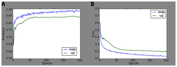 Accuracy and loss graphs for KL-MOB on training and validation of the original images: (A) accuracy and (B) loss.