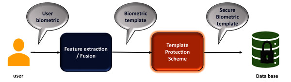 Biometric authentication system incorporating template security.