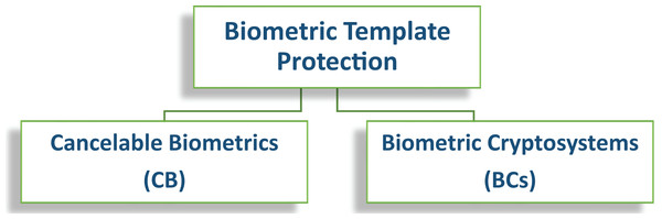 General categorization of template protections schemes.