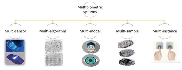 Types of multibiometric system.