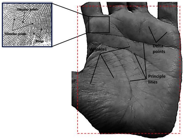 Example of human palm print.